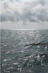 Wild Gulf